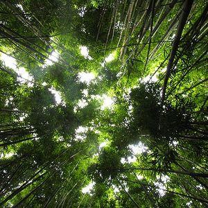 Deep Jungle Trib