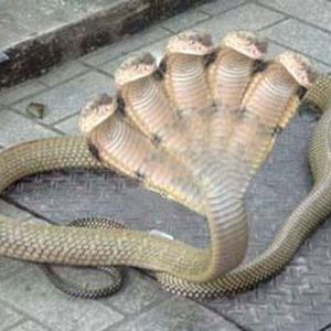 Snakes #05 - 21/10/11 - on RadioBasePopolare