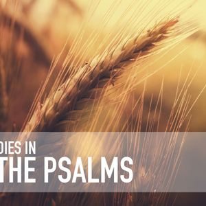 Studies In The Psalms   Fret Not, Follow Courageously   Psalm 37