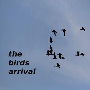 birds arrival