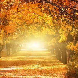 Autumn part 2