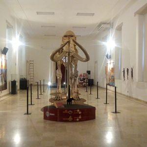 Mamut de Ecatepec. El gigante de la prehistoria
