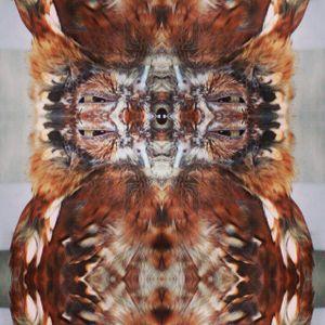 Grom Zuks - Ruffled Feathers 2