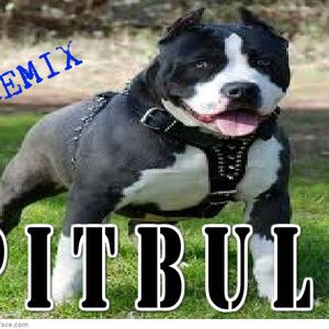 pitbull ft various artist