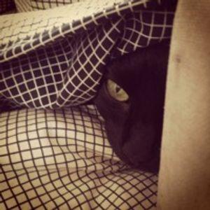 kedidir kedi