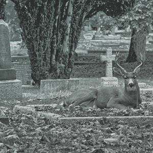 THE GRAVES HAVE DEERS (COLD IS BEING MIXTAPE)