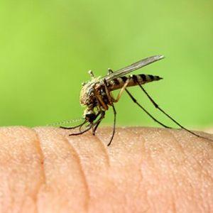 Cómo prevenir el virus del Zika