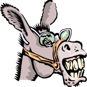 Donkey Mix 23 - Latin Shorts