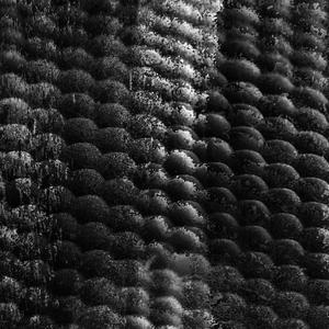 Twin Peetz : Microscopic 022 (March2016)