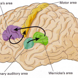 Theory  – CNS Part 7