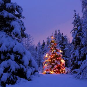 Seasons of Poetry Episode 9.Holiday Poems