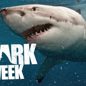 Shark Week: What Drags You Under