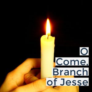 O Come, Branch of Jesse