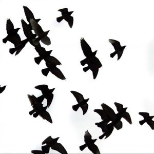 Like Birds Aug.2009