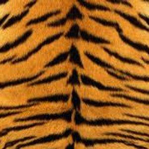 The Bengal Tiger Mix