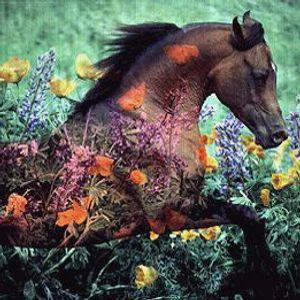 horse songs for J.