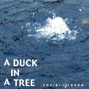A Duck in a Tree 2012-10-20 | Sustained with Silence and Water