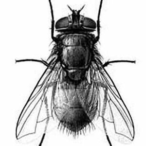 thebrundleflyproject