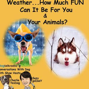 Weather - How Much Fun Can It Be For You And Your Animal?