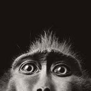 Cheeky Chimp Disco - Let Me Show You My Monkey...
