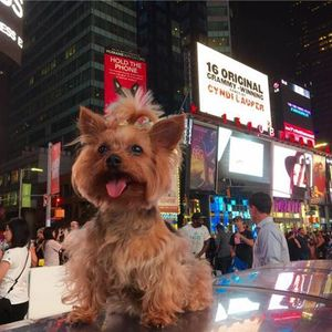 Pet Radio- Roxie in the City-Six Pounds of Excitment