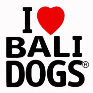 Highlighting the plight of the Bali dogs