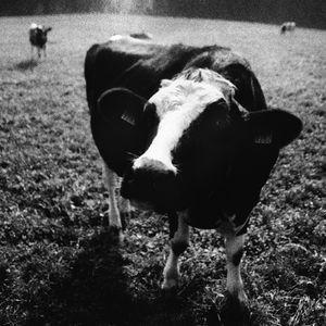 #165 - Chueraiheli. Cloches De Vaches, Solo D'Homme