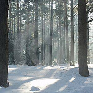 Late Winter Set