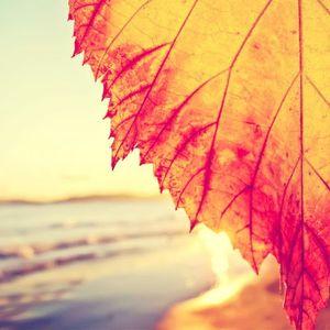Autumnal Approach