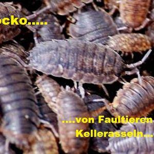 Mocko - von Faultieren und Kellerasseln