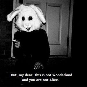 Hoy he matado un conejo