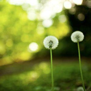 D Tur aka Mitru - L'invocation du printemps