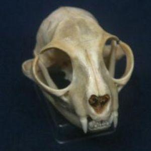 the cat skull returns