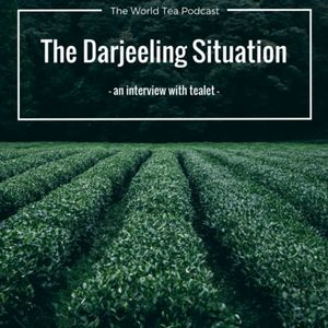 The Darjeeling Situation - An Interview with Tealet