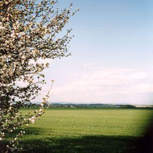 BorG - Spring Flow