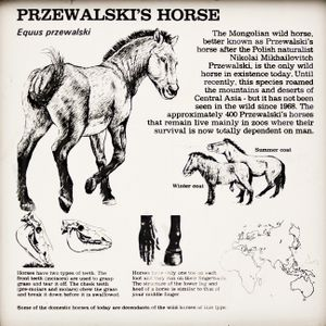 ZOOECHO RECORDS 30# Koń Przewalskiego / тахь (Nic Znanego - Jędrek Jendrośka)