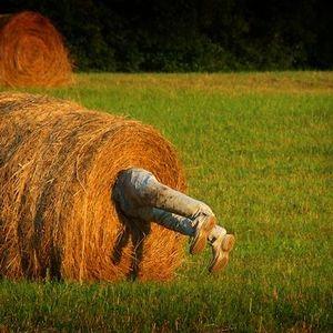 Dark Matter - Making Hay