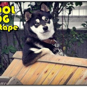 Cool Dog, the MIXTAPE.