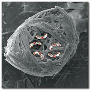 Softmolecular