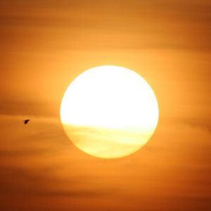 Flocalis - Sommer, Sonne, Rave Vol.6