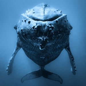 Music From 'Humpback Whales: A Detective Story'