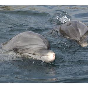 Dolphin Rescue, Rehabilitation and Release