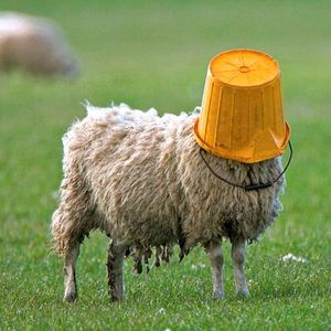 Sheepness Overload 004