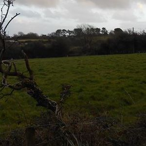 A piece to promote  the saving of Green Fields at Carnniney Lane from housing development