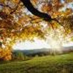 Autumn Moods so Good so Right Mix