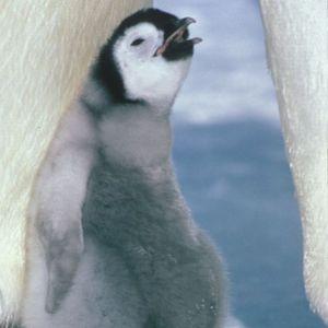 Episode 14 Penguin Suicide