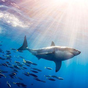 Electronic Expedition #1 (DJ Sharkweek)