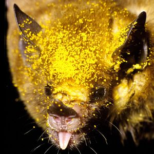 The Minimal Nectar