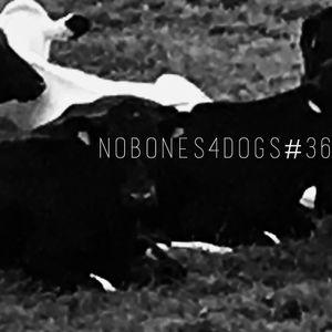 nObOnes4dOgs radiO shOw # 36