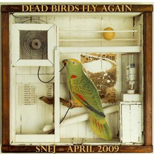Dead Birds Fly Again